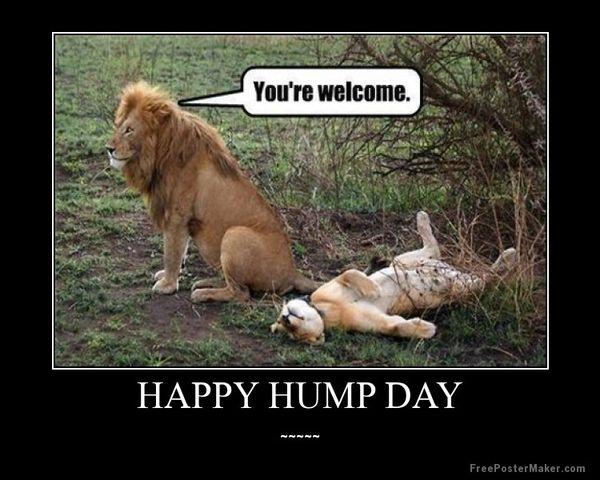 De conversatie : Happy hump day pics and quotes