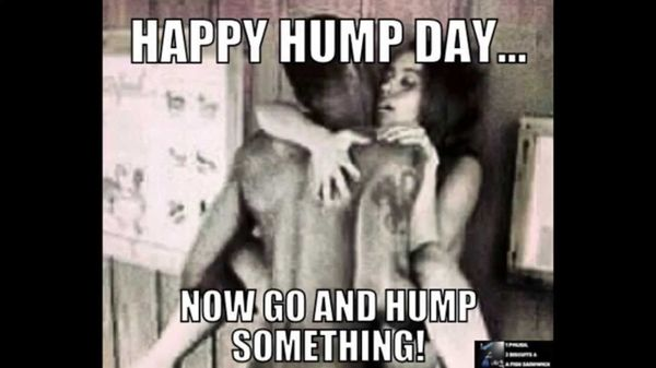 Funny-best-hump-day-meme-image