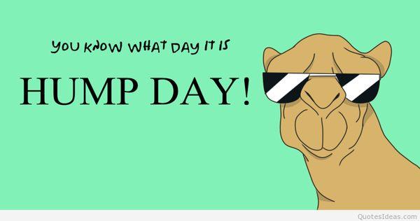 Funny-happy-hump-day-meme-jokes