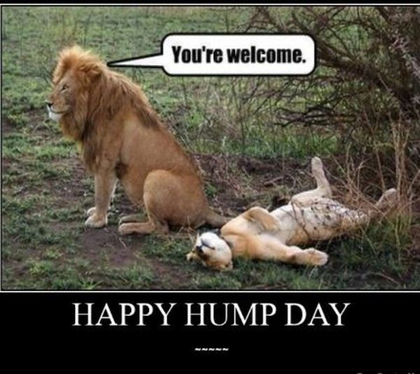 Funny Happy Hump Day Meme Pictures Preet Kamal