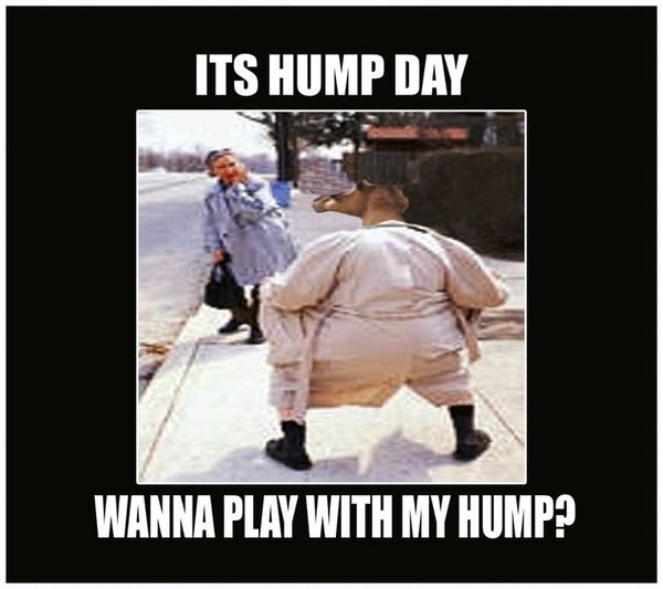 Very-funny-hump-day-memes-image