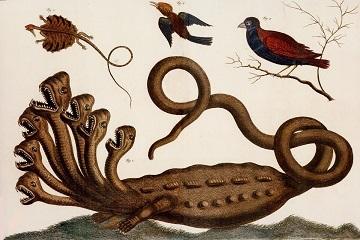 Linnaean Hydra