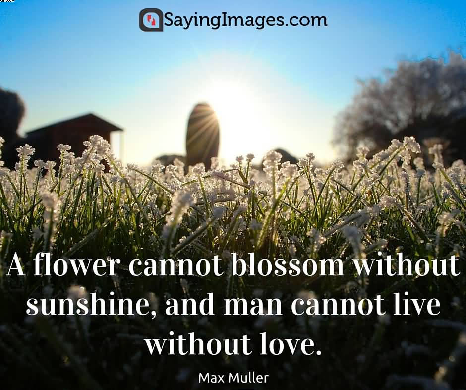 A flower cannot blossom without sunshine Nature and Earth Quotes