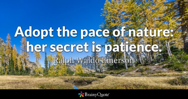Adopt The Pace Of Nature Inspirational Nature Quotes and Sayings