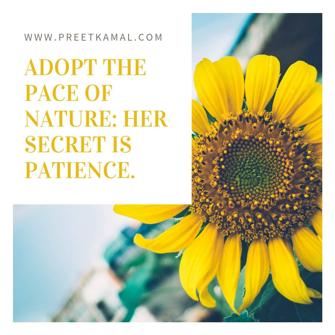 Adopt The Pace Of Short Nature Quotes