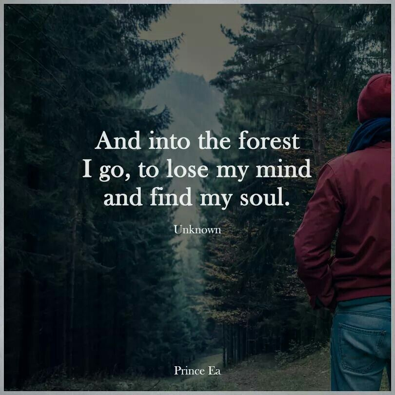 And Into The Forest Inspirational Nature Quotes and Sayings