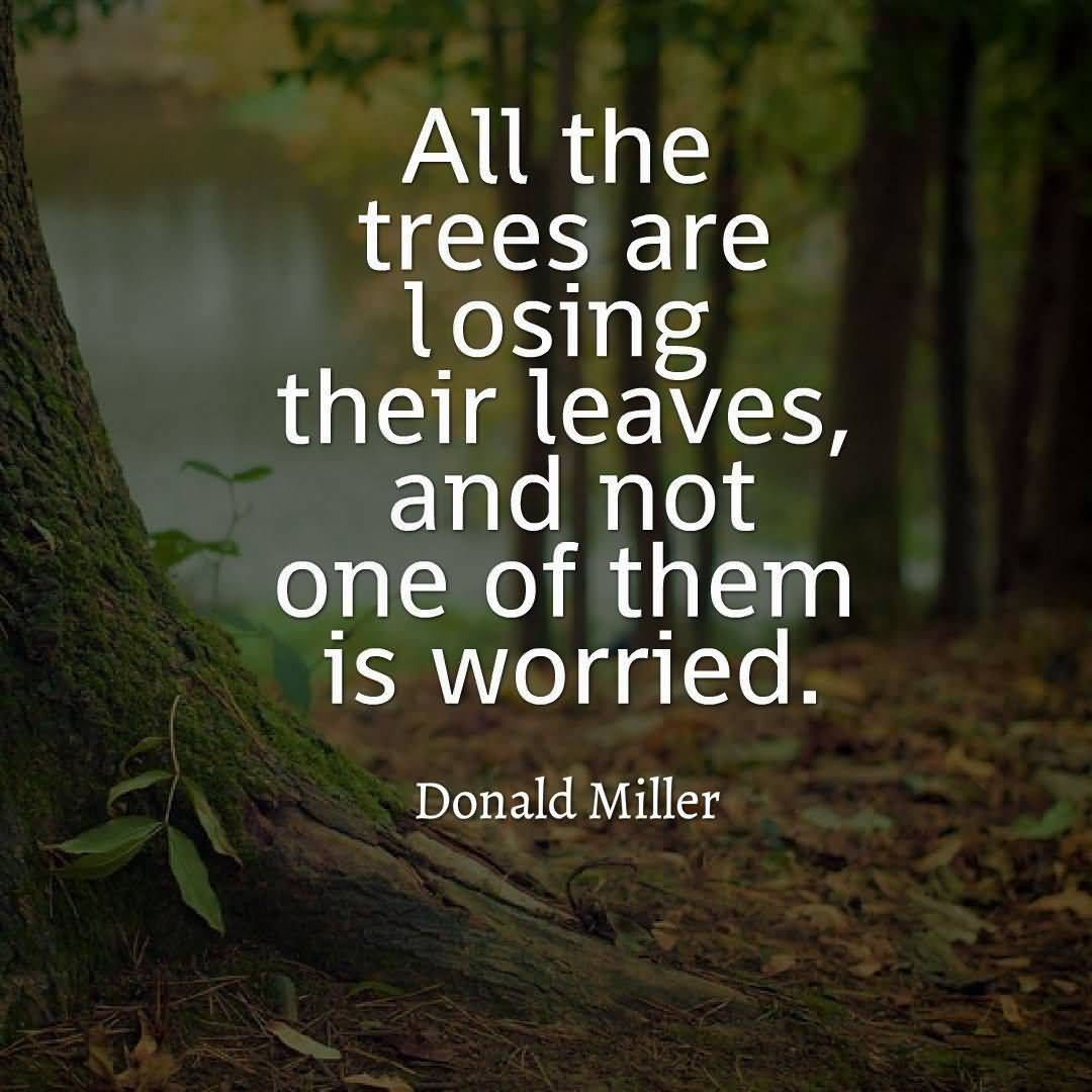 Inspirational Nature Quotes and Sayings All The Trees Are