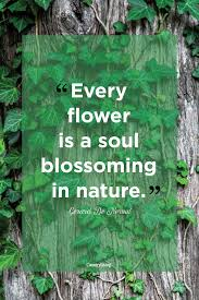 Inspirational Nature Quotes and Sayings Every Flower Is A