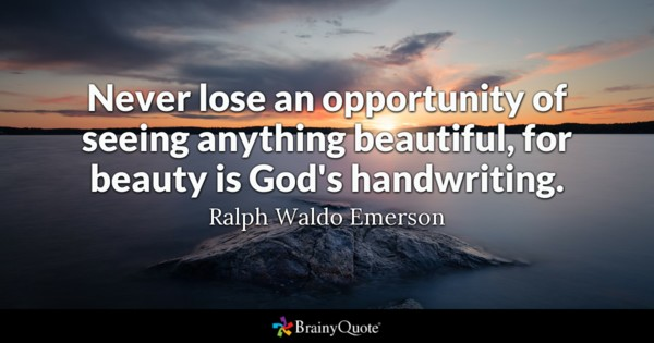 Never Lose An Opportunity Beautiful Quotes