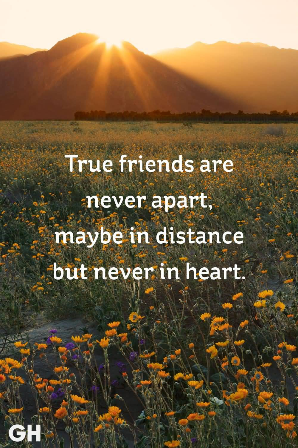 True Friends Are Never True Friendship Quotes