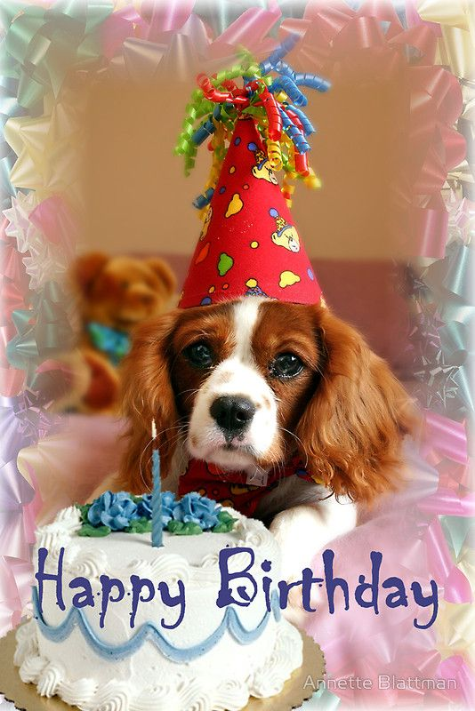 Happy birthday cute dog wallpaper to Godchild