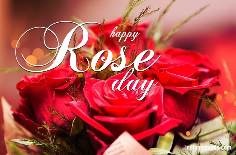 Happy Rose day attractive image with full of roses wallpaper for you love