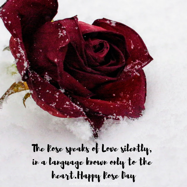 Happy Rose day awesome image for kind lover that is you
