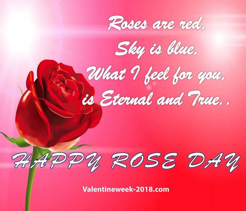 Happy Rose day on valentines day to you my love with best feelings image