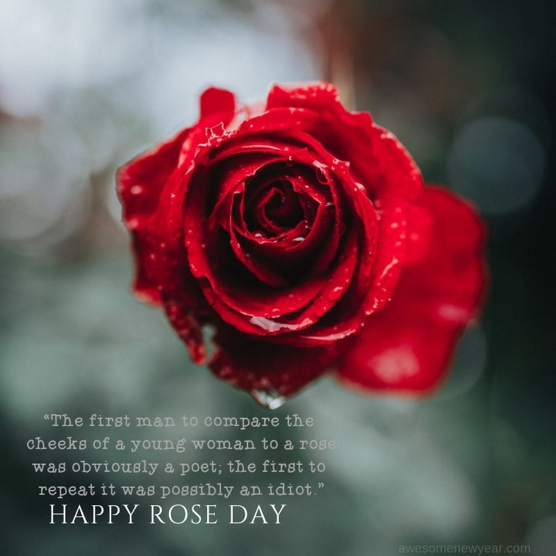 Happy Rose day wonderful message with wish for your cute lover