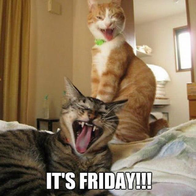 Friday Meme Its Friday!!!