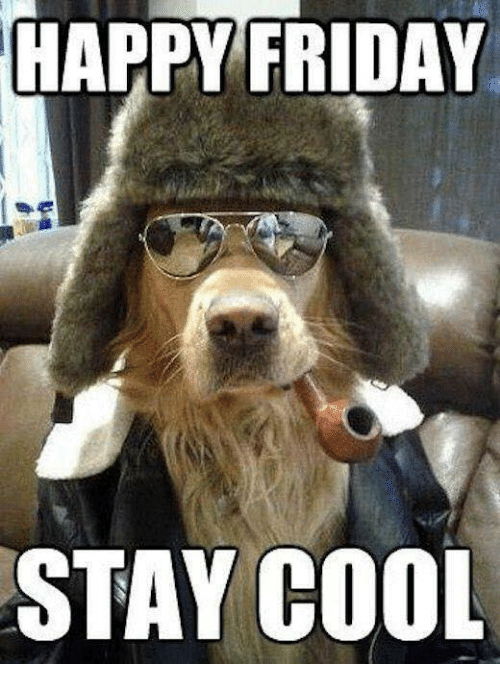 Happy Friday Stay Cool Friday Meme