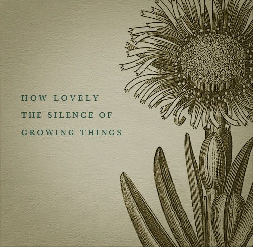 How Lovely The Silence Of Plant Quotes