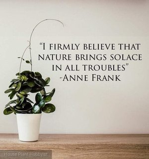 I Firmly Believe That Nature Plant Quotes