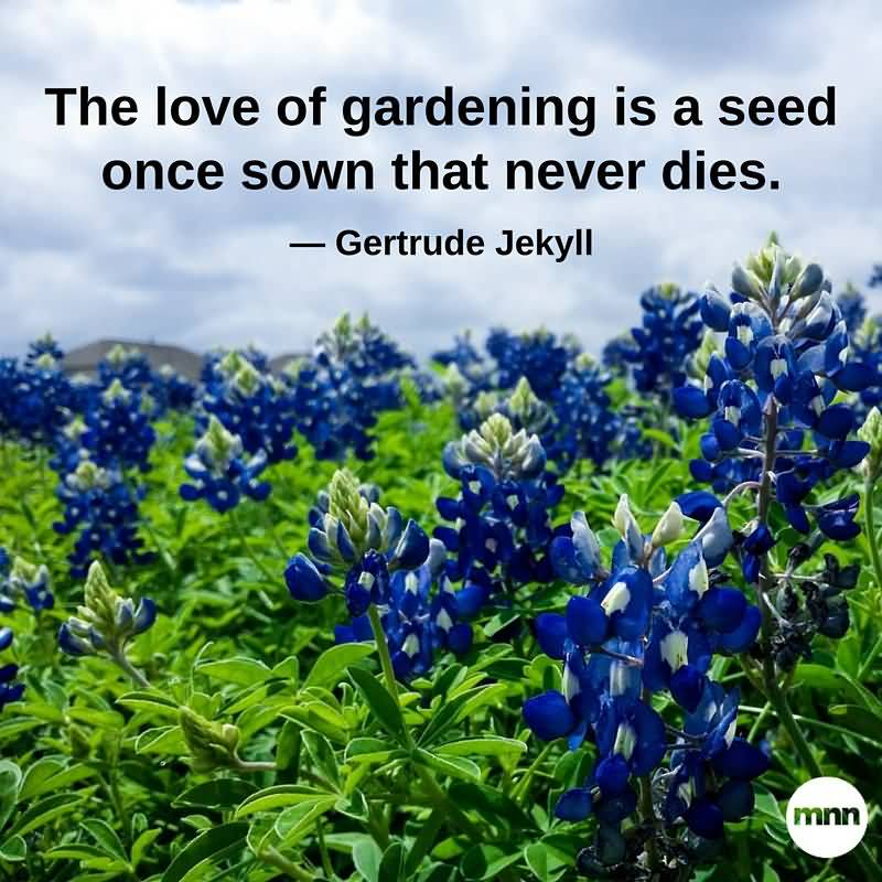 The Love Of Dardening Is A Plant Quotes