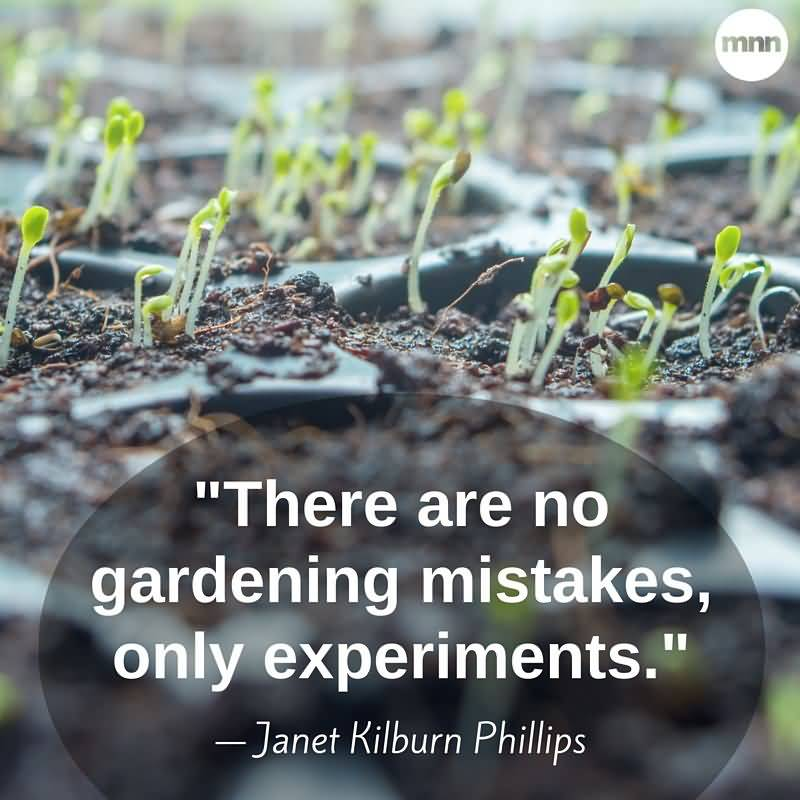 There Are No Gardening Mistakes Plant Quotes