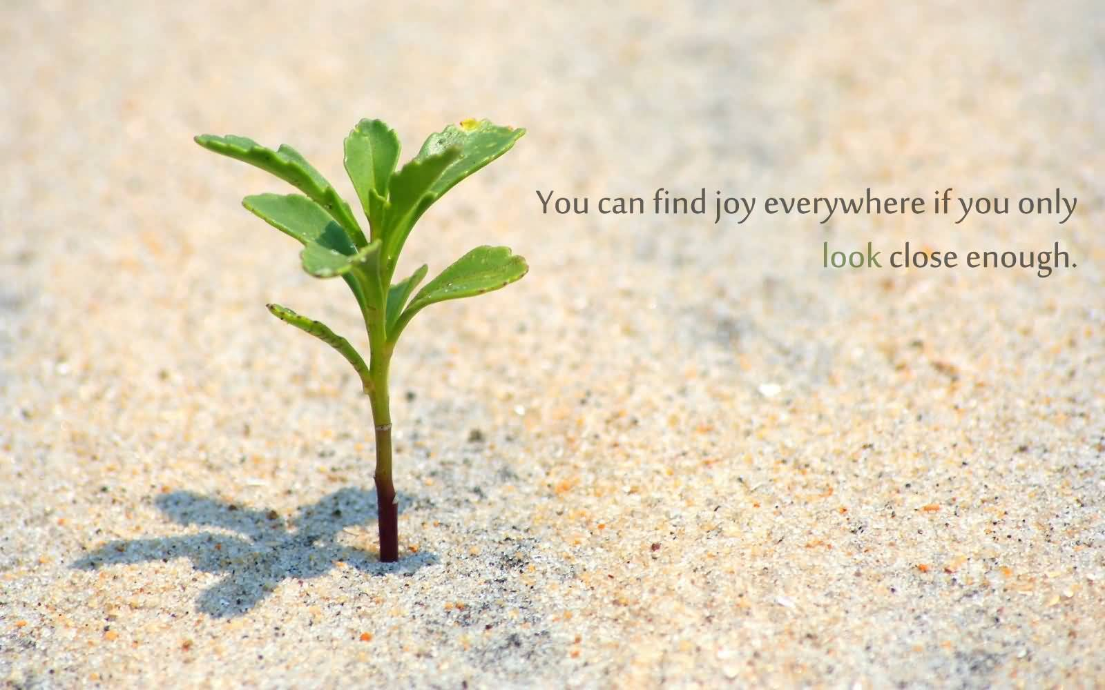 You Can Find Joy Plant Quotes