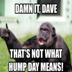 Damn It Dave That's Not What Hump Day Meme