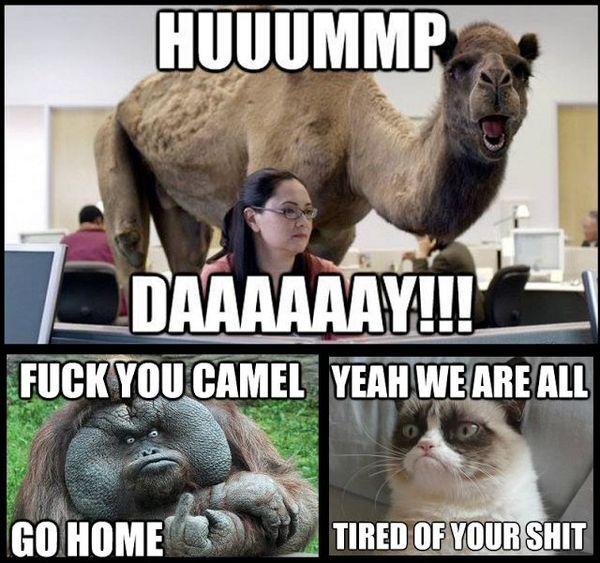 Fuck You Camel Go Home Hump Day Meme