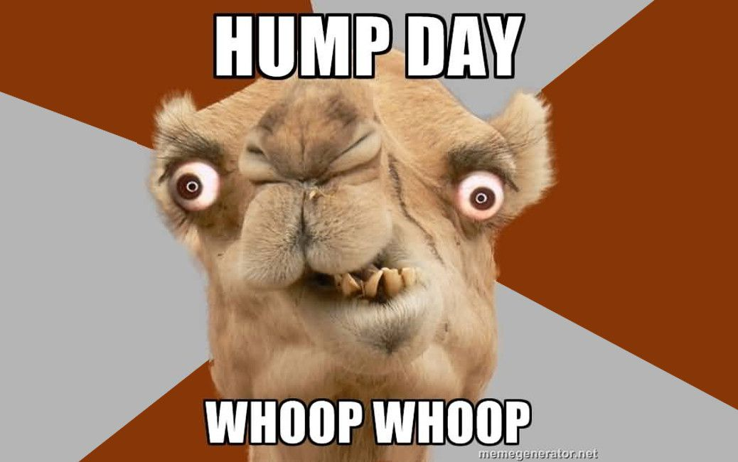 Hump Day Whoop Whoop Hump Day Meme