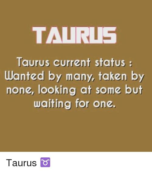 Taurus Current Status Wanted Taurus Memes