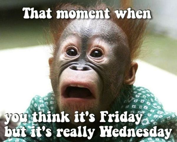 That Moment When You Think Hump Day Meme