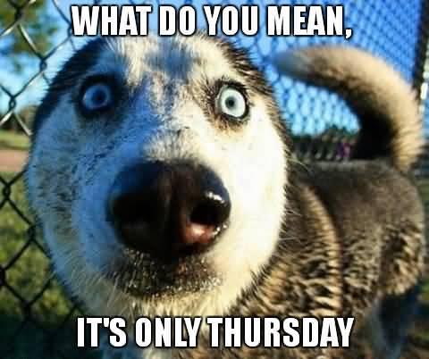 What Do You Mean Thursday Meme
