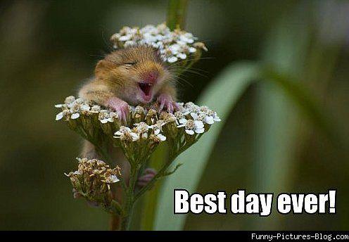 Best Day Ever! Flower Meme