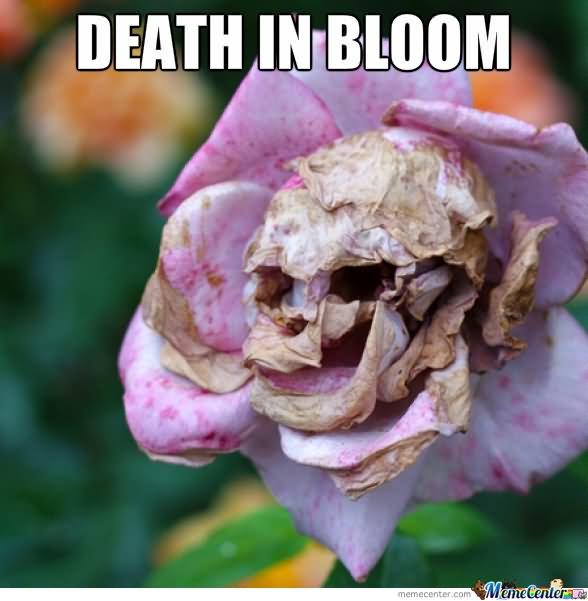 Death In Bloom Flower Meme