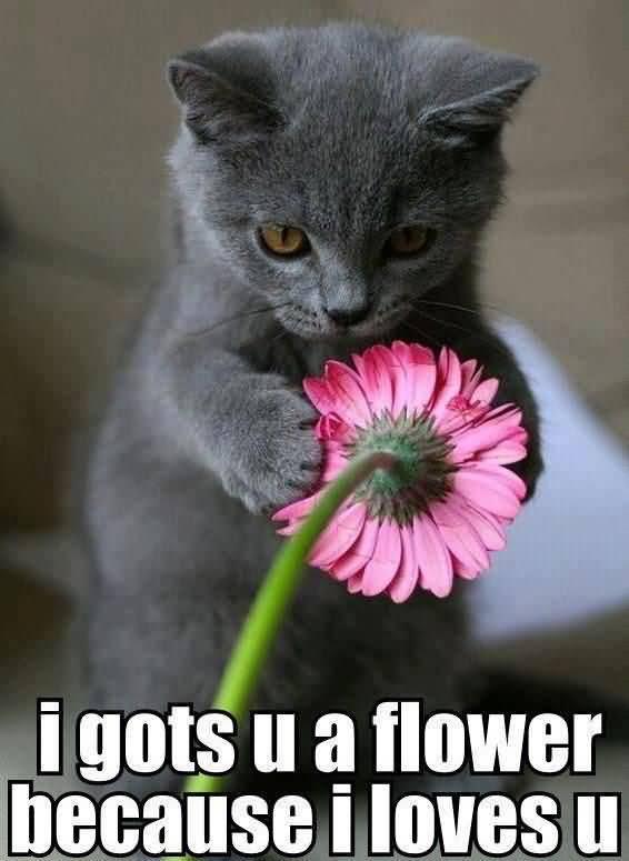 I Gots U A Flower Because Flower Meme