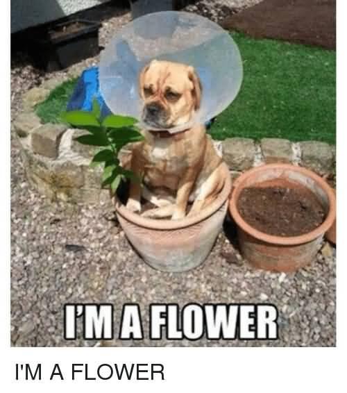 I'm A Flower Flower Meme