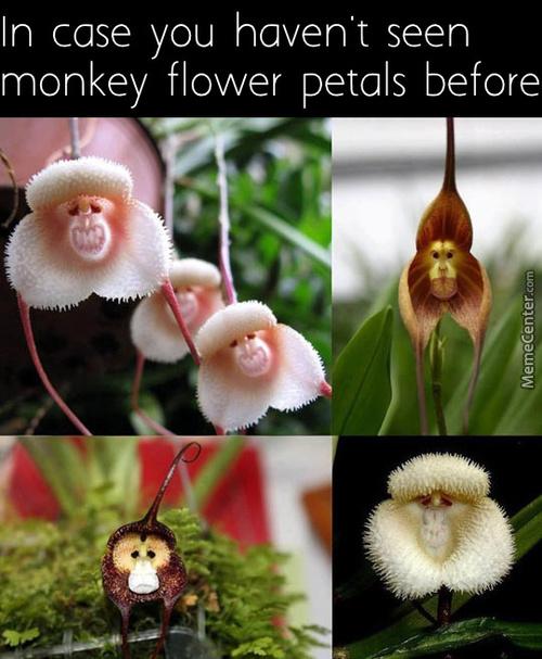 In Case You Haven't Seen Flower Meme