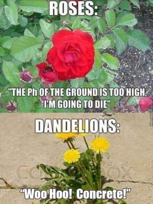 The Ph Of The Ground Flower Meme