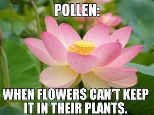 When Flowers Can't Keep Flower Meme