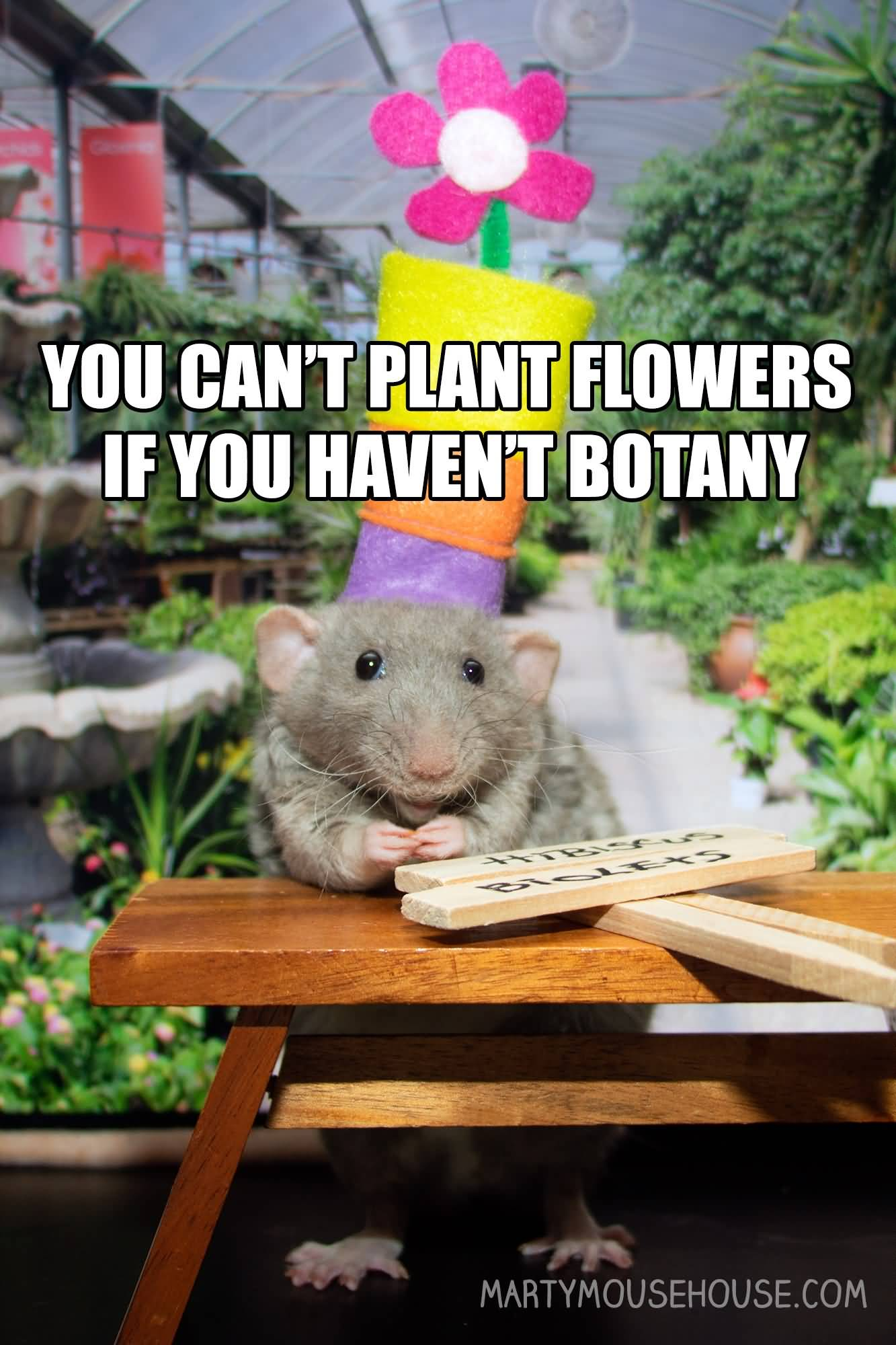 You Can't Plant Flowers Flower Meme