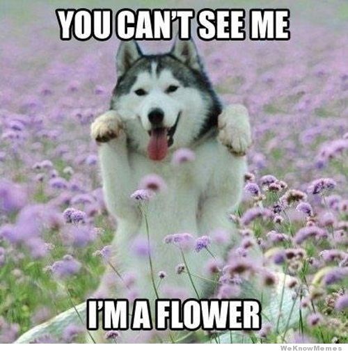 You Can't See Me Flower Meme