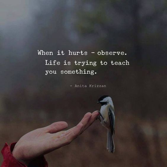 When It Hurts Observe Pain Quotes